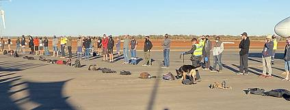 Operation Nets Drugs At FIFO Airport